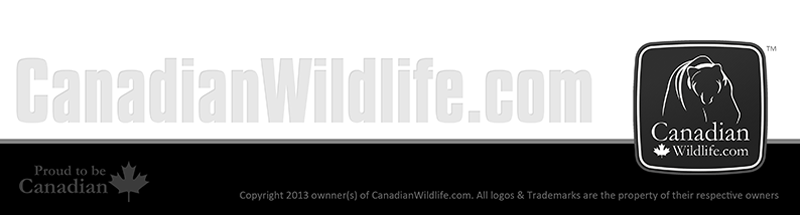 Welcome to the Canadian Wildlife website!