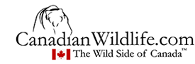 CanadianWildlife.com / The Wild Side of Canada™